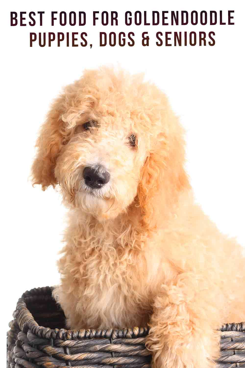 Best Food For Goldendoodle Puppies, Dogs & Seniors_
