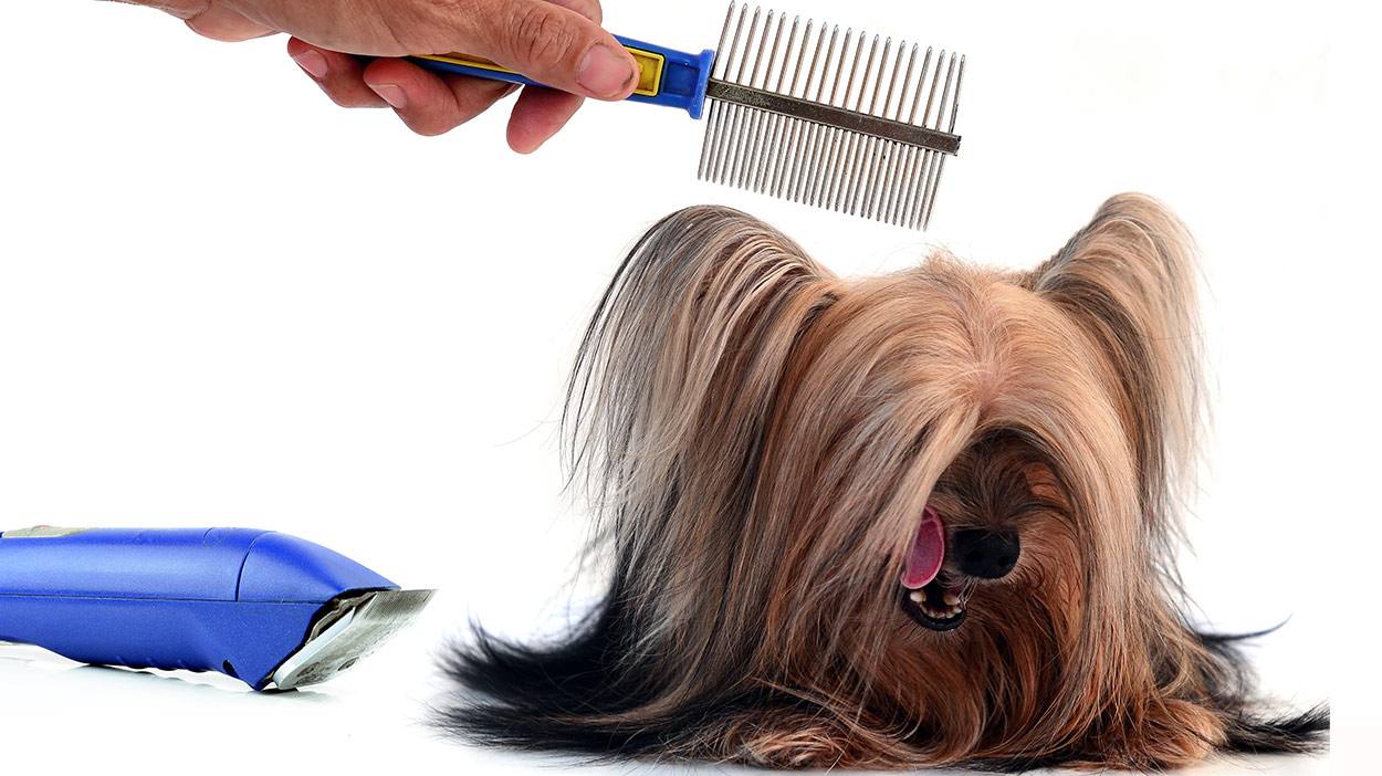 Brushes for Yorkies