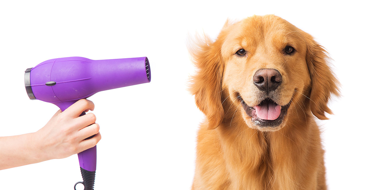 best shampoo for golden retriever