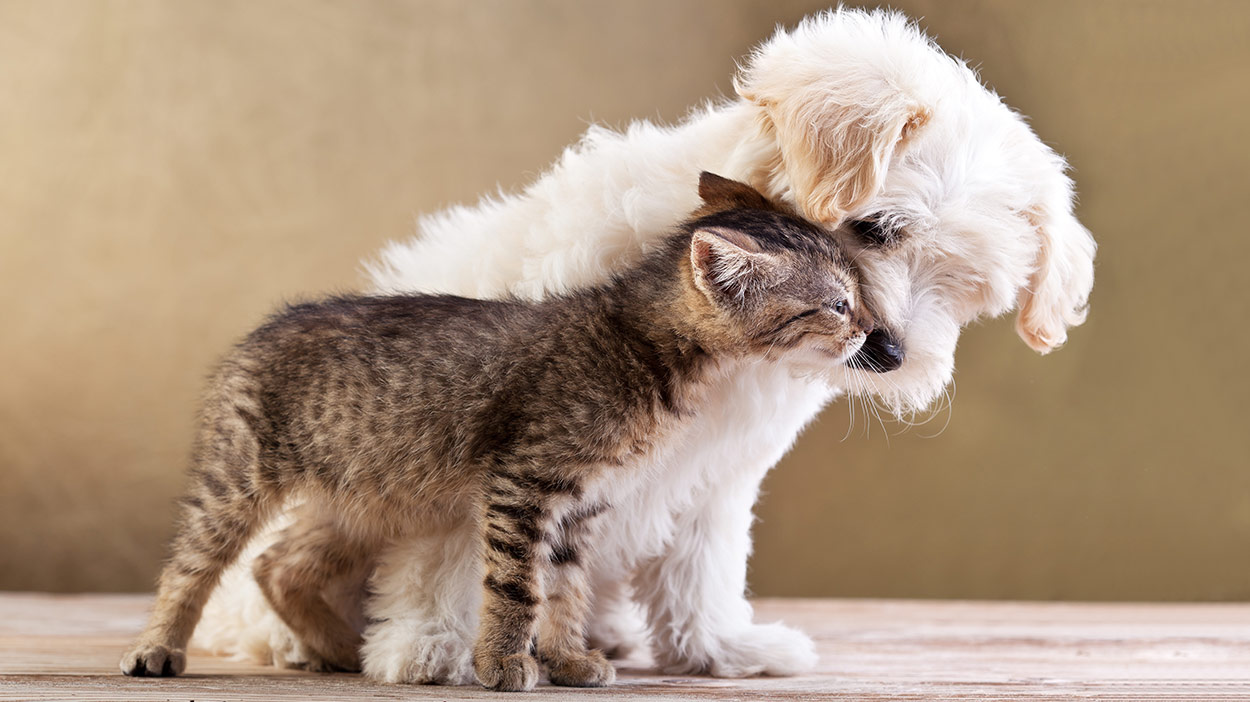 is catnip bad for dogs