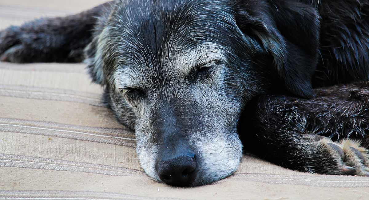 Senior animal shelter dog sleeping