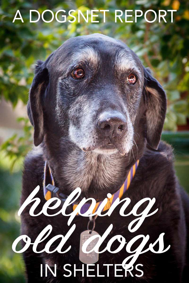 Helping senior animal shelter dogs - a new report
