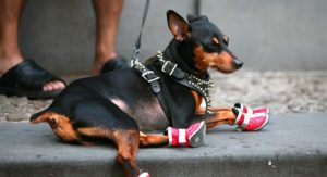 Best Dog Hiking Boots For Off-Roading It With Your Pet