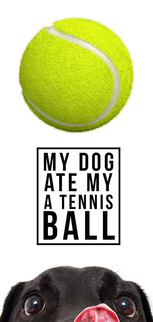 my dog at a tennis ball