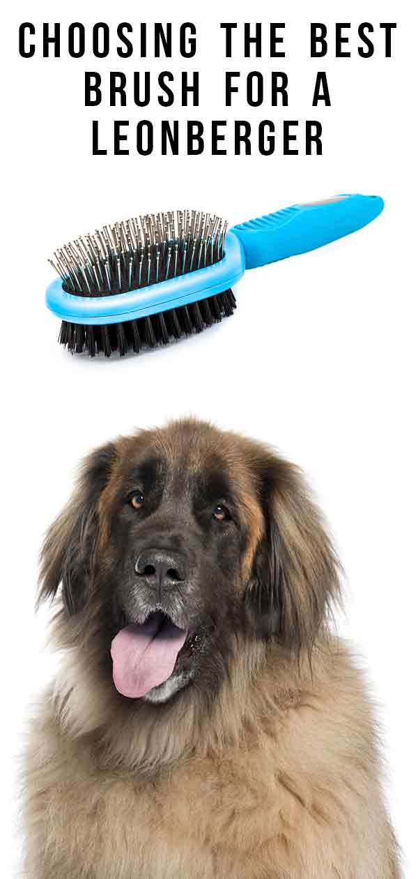 best brush for a leonberger