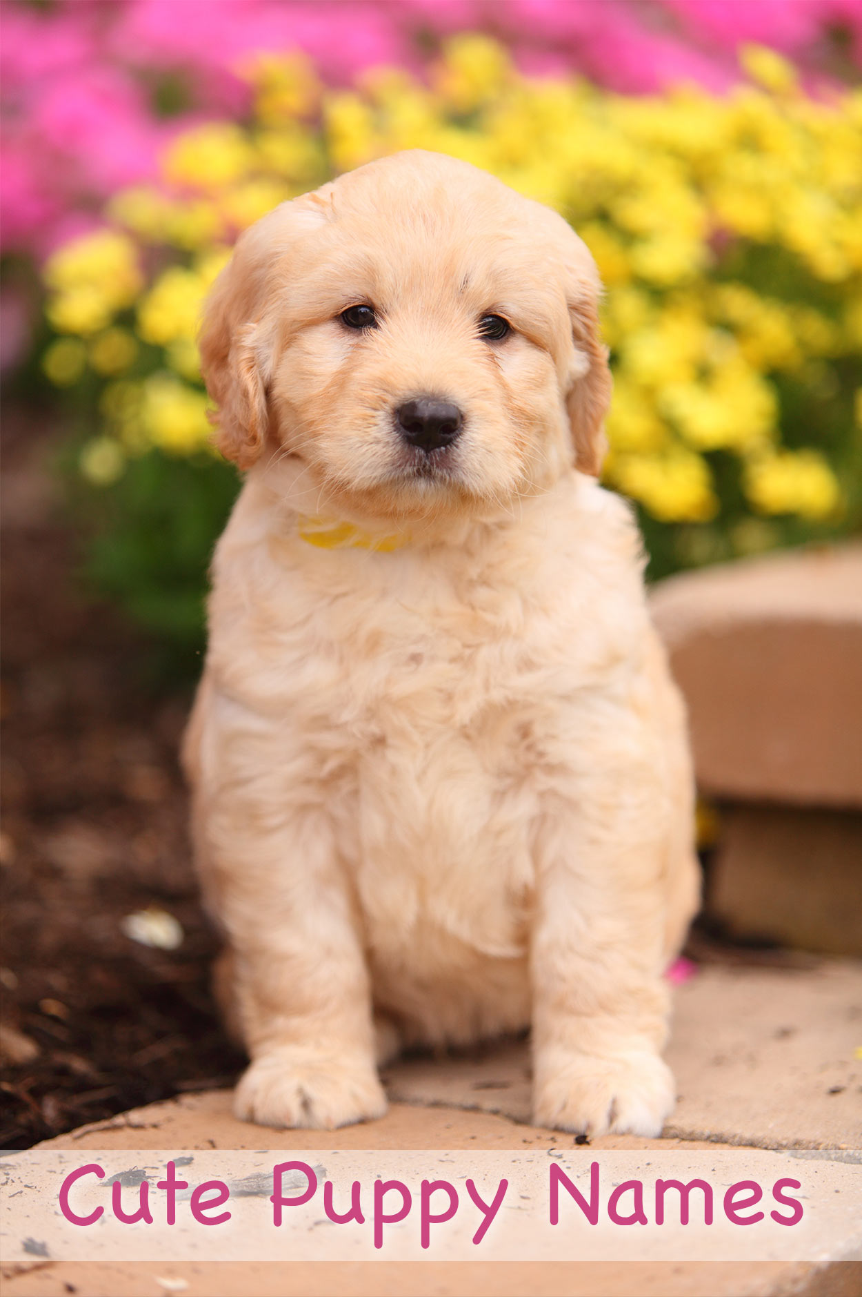 Cute Puppies 17 Pics: Adorable Ideas For Naming Your Puppy