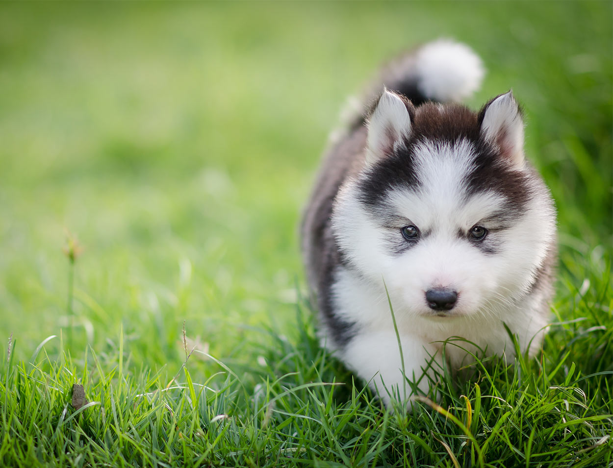 cute puppy names adorable ideas for naming your puppy