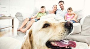 Is A Labrador A Good Family Dog? What You Need to Find Out