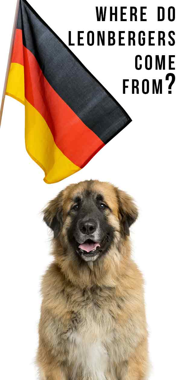 where do leonbergers come from