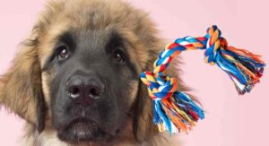 Best Toys For Leonberger Puppies That Love To Play