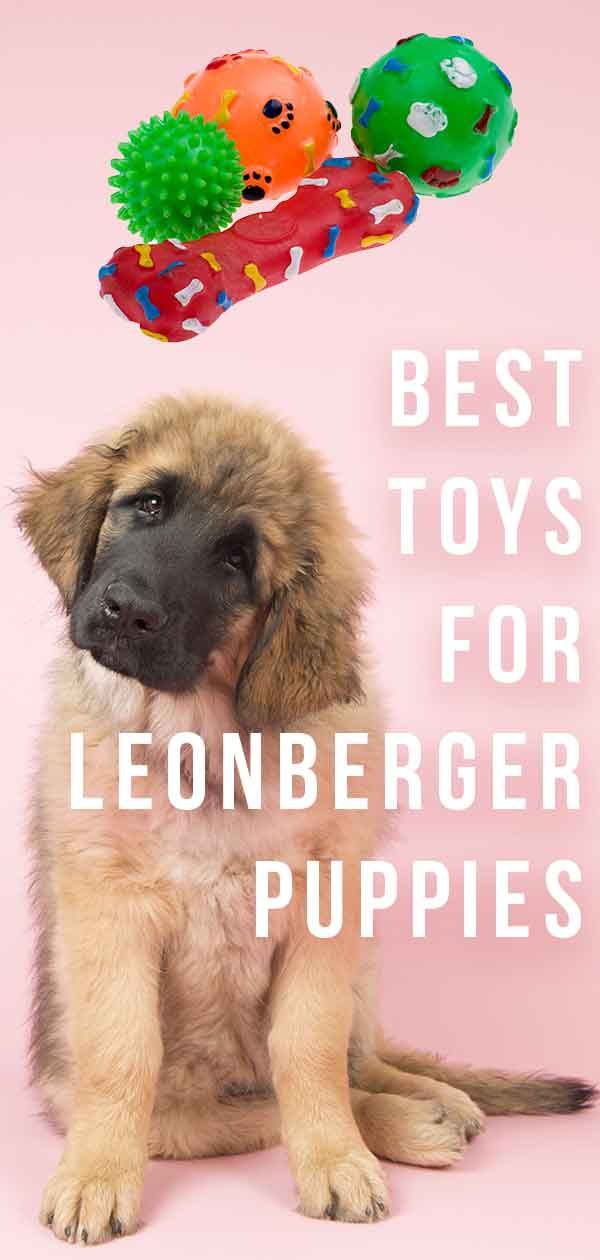 Best Toys For Leonberger Puppies