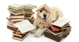 One Syllable Dog Names – Which Is Best for Your One of a Kind Dog?
