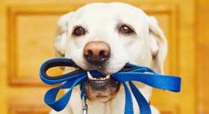 How To Choose The Best Dog Leashes