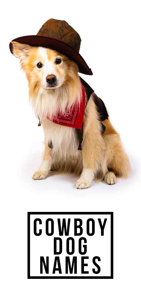 Cowboy Dog Names – Fun Wild West-inspired Names for Your New