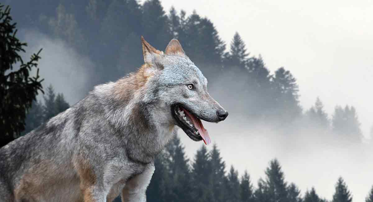 Female Wolf Names