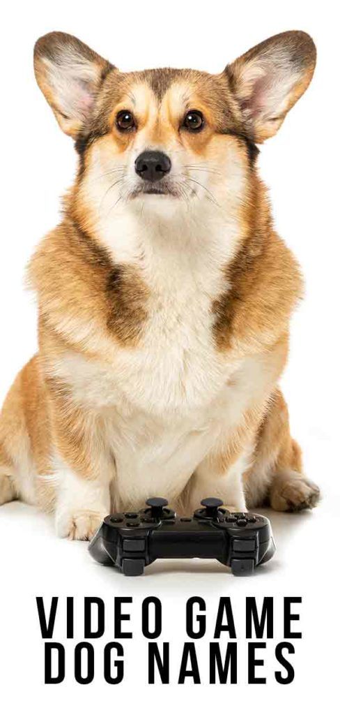 Video Game Dog Names