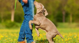 Why Do Dogs Jump On You? Scientific Study Throws New Light On This Common Problem