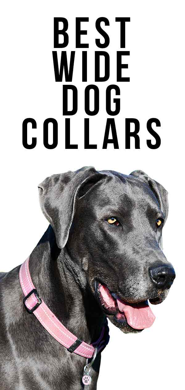 best wide dog collars
