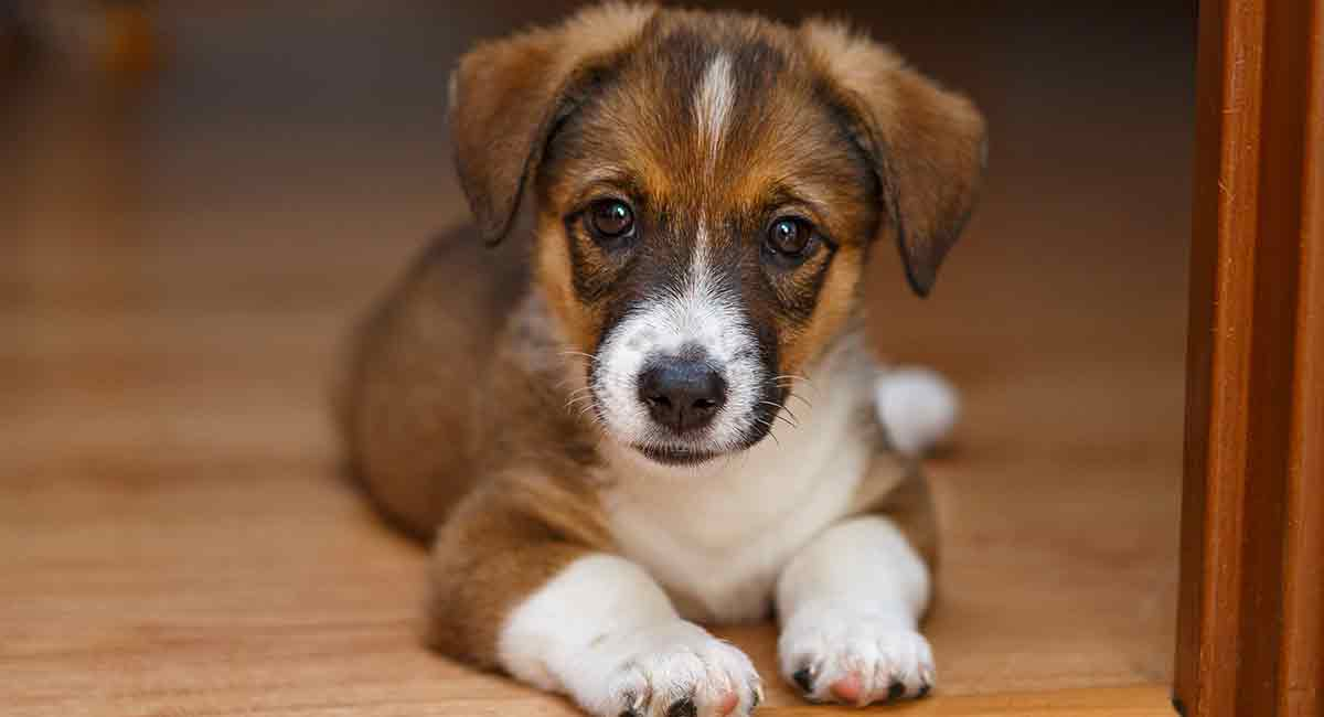 side effects of deworming a puppy