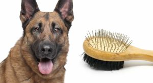 Best Brush for German Shepherd Dogs