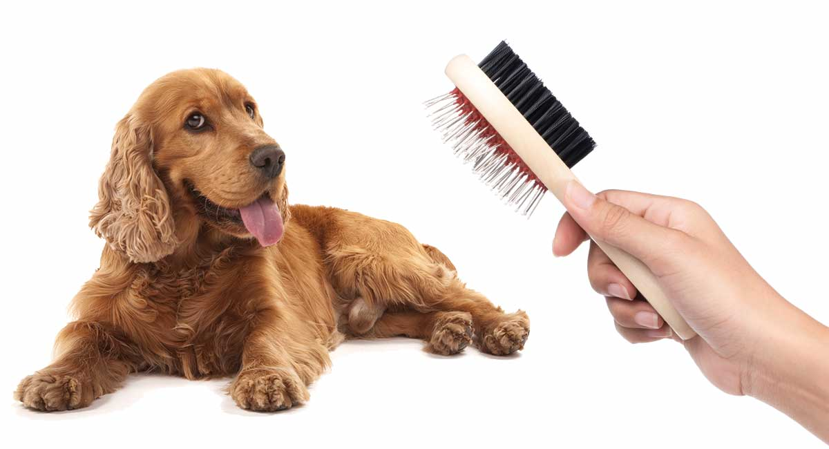 best brush for cocker spaniels