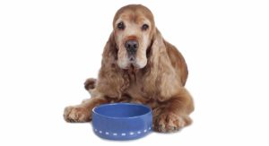 Best Dog Food For Seniors With Sensitive Stomachs