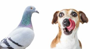 My Dog Ate A Bird: What to Do Next?