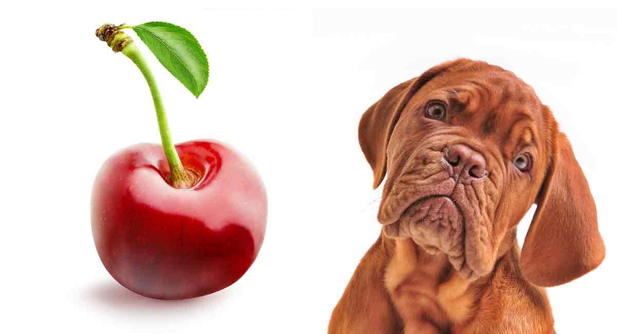 my dog ate a cherry
