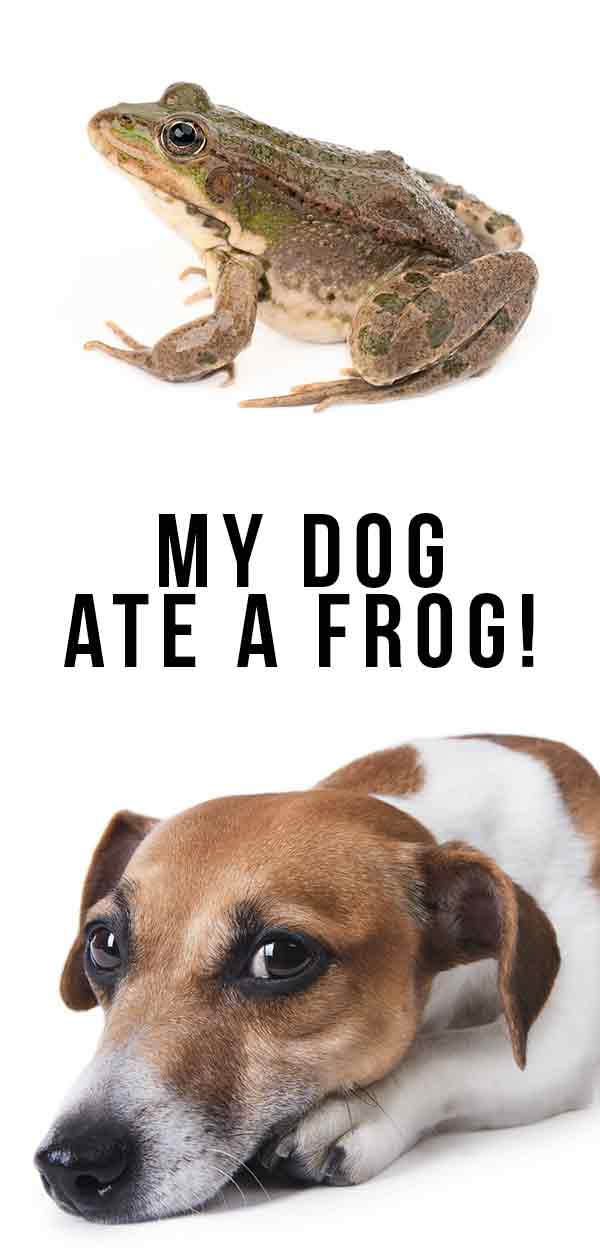 my dog ate a frog