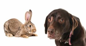 My Dog Ate A Rabbit – What To Do Next