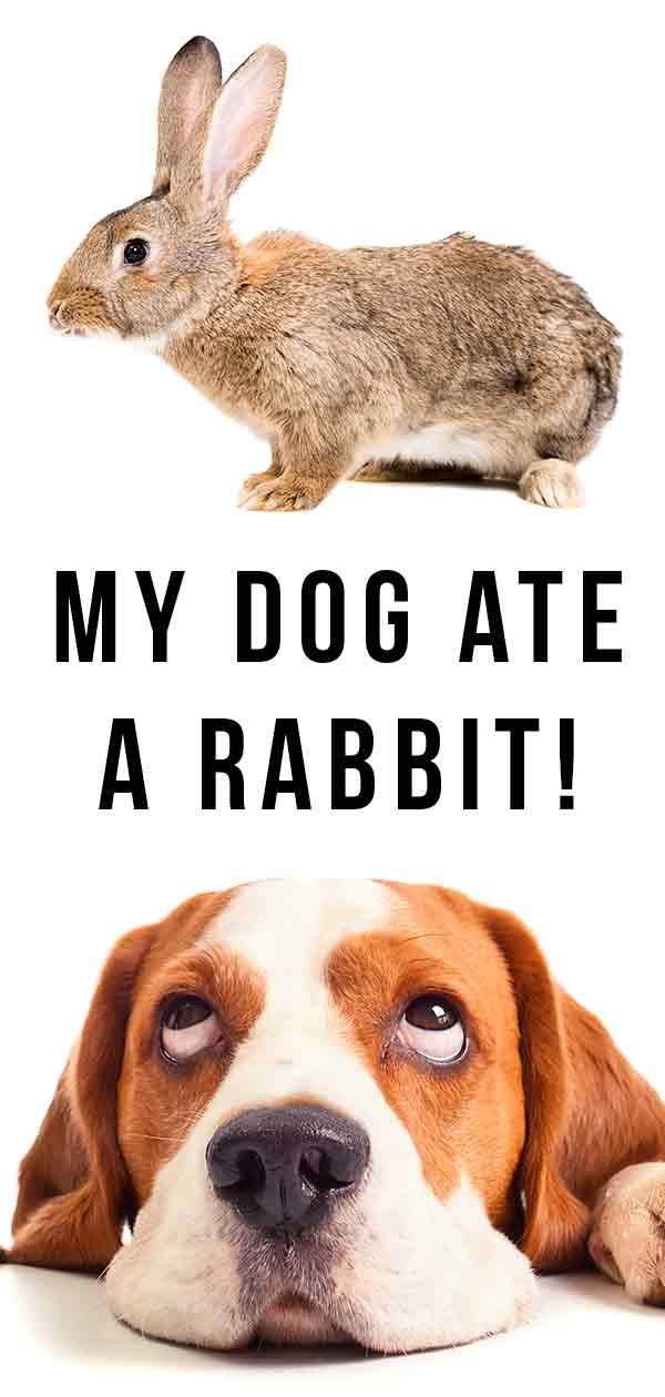 my dog ate a rabbit