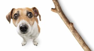 My Dog Ate Wood: What Should You Do Next?