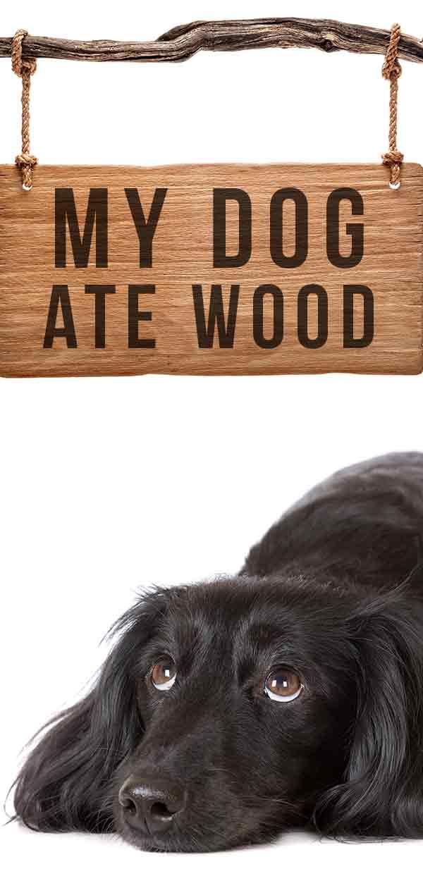 My Dog Ate Wood