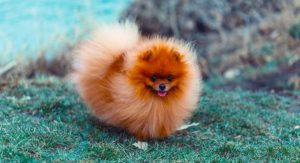 15 Fluffy Dogs to Steal Your Heart and Make You Smile