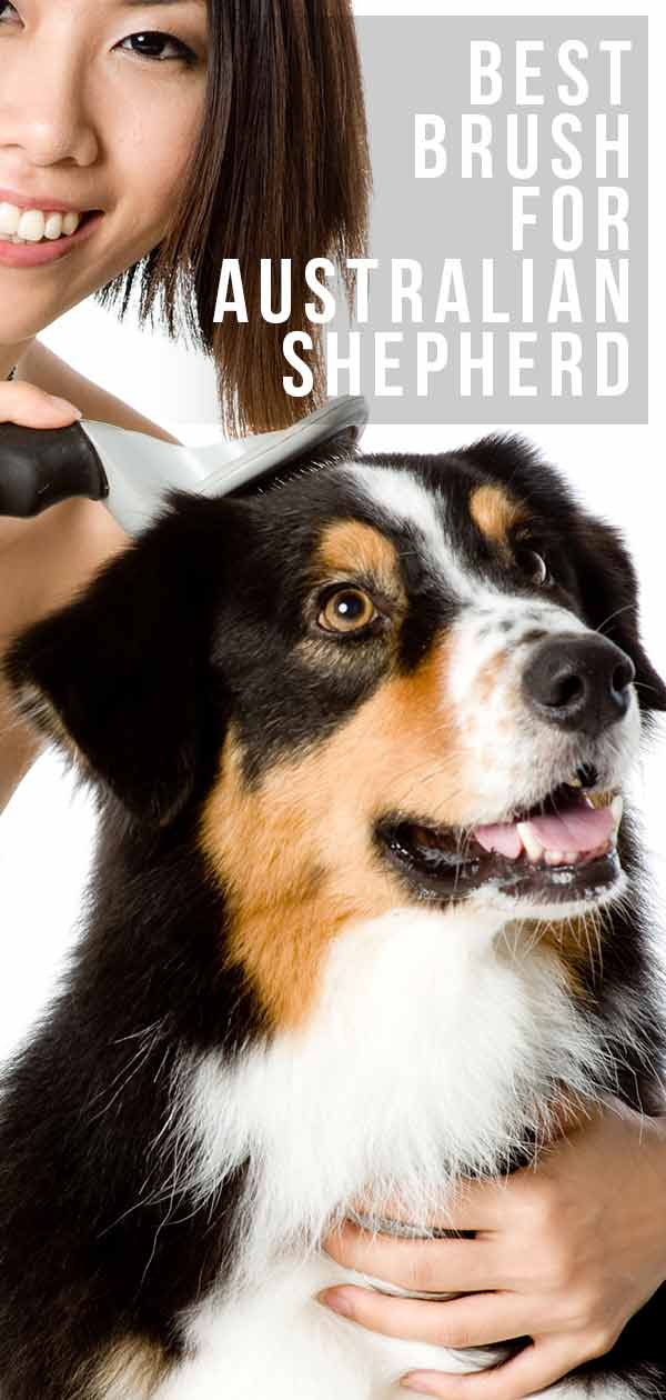 Best Brush for Australian Shepherds