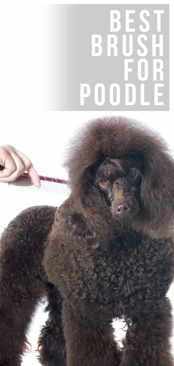 best brush for poodle