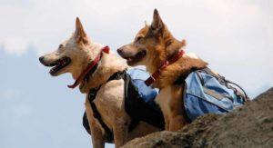 Best Dog Backpacks – Get Your Dog To Help Carry The Load!