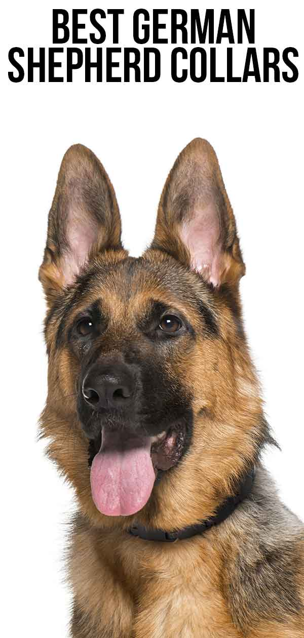 best German Shepherd collars