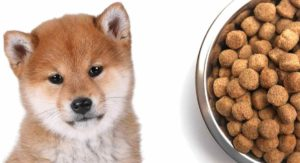 Feeding a Shiba Inu Puppy: When to Feed, What to Feed and How Much