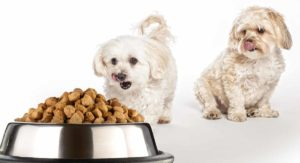 Best Dog Food For Maltipoo – From Puppies to Seniors
