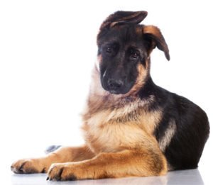 How Three Letters Can Help You Train Your Dog