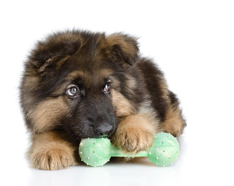 best toys for German Shepherds