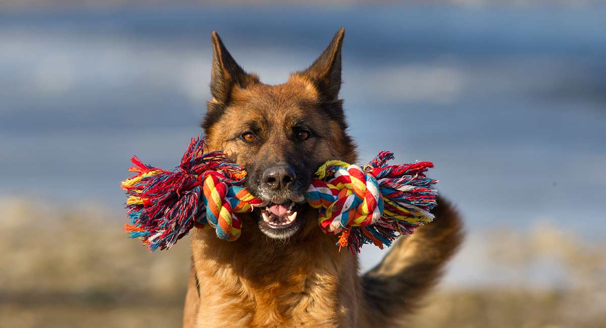 best toys for German Shepherds