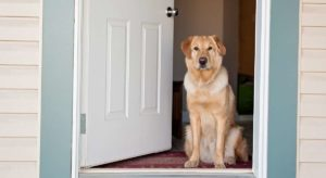 Impulse Control For Dogs – Teaching Your Pup To Keep His Cool