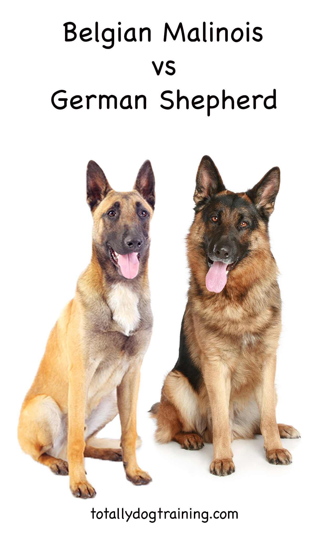 elgian Malinois vs German Shepherd