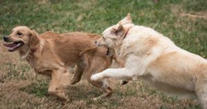 Over Friendly Dogs – How To Cope With And Train Your Pup