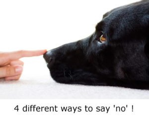 dog training using the word no