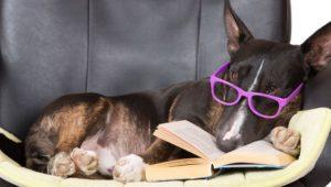 Teach Your Dog English