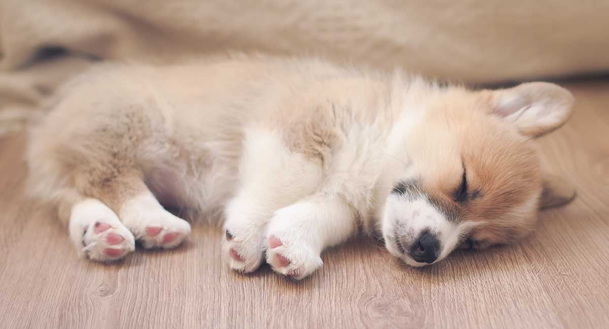 how to get a puppy to sleep