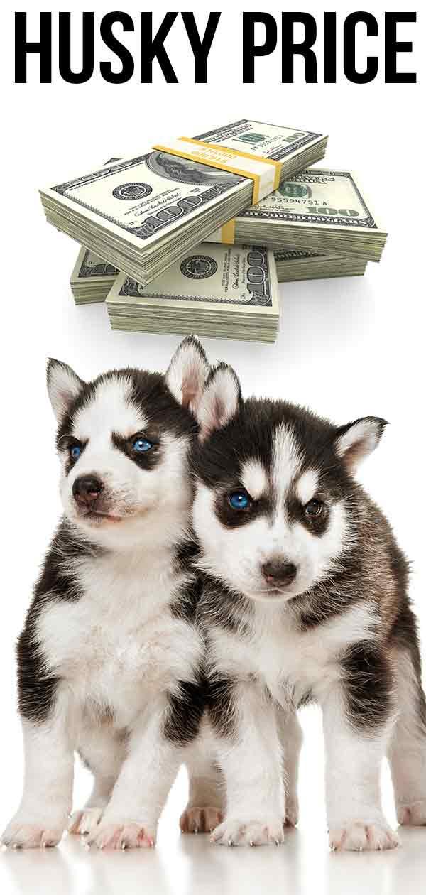 husky price